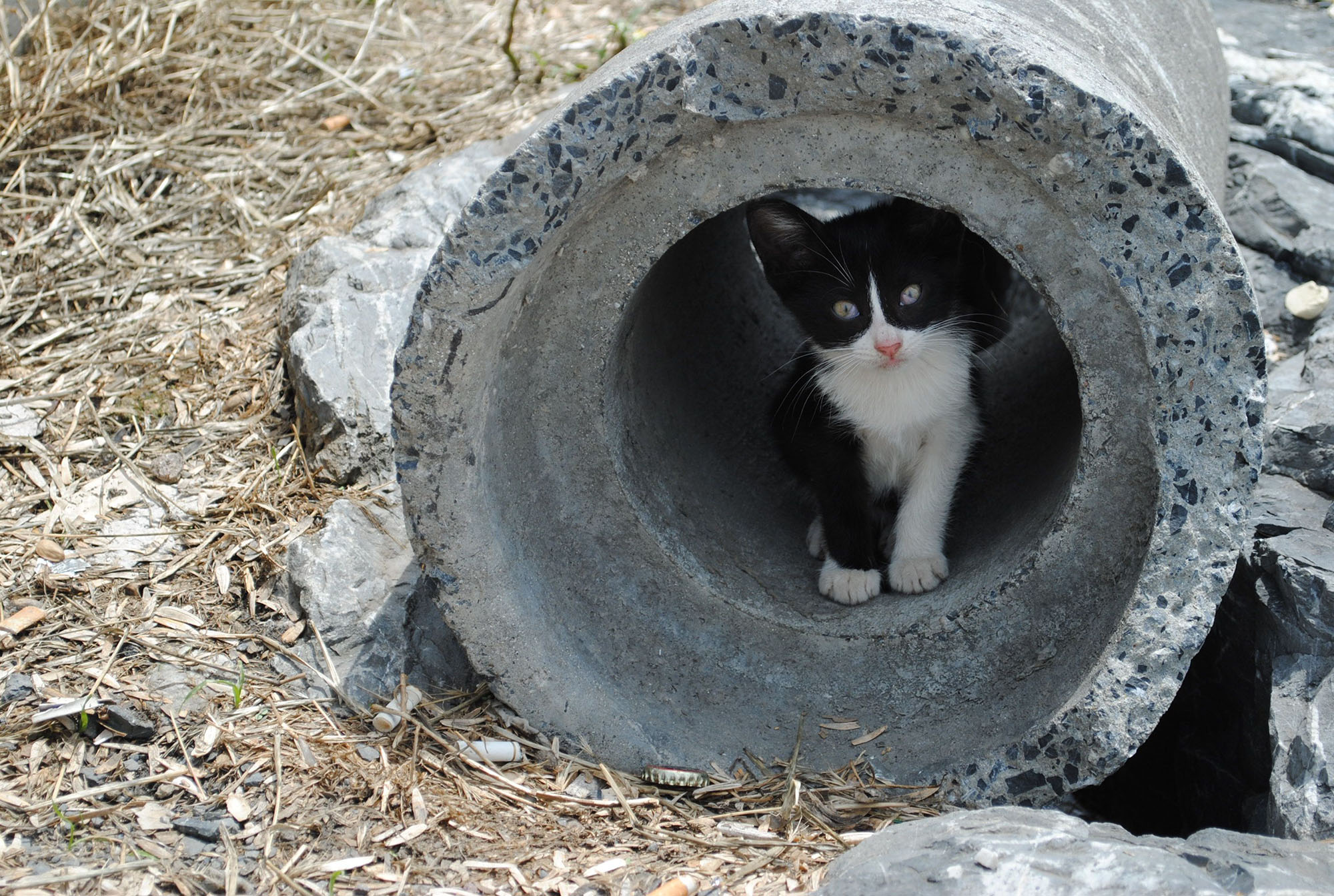 cat-in-a-tube_w725_h487-small